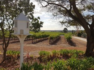 'In The Vines' Guest Cottage - Accommodation Search
