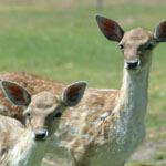 Marapana Wildlife Park - Accommodation Search