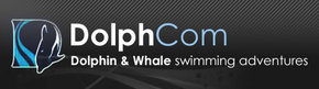 Dolphcom - Dolphin  Whale Swimming Adventures - Accommodation Search
