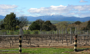 Buller View Wines - Accommodation Search