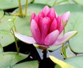The Lotus Day Spa and Retreat - Accommodation Search