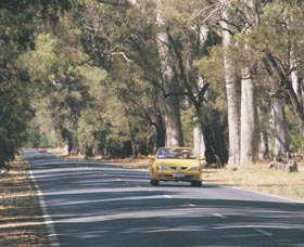 Ludlow Tuart Forest - Accommodation Search