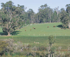 Scenic Drives - Bunbury Collie Donnybrook - Accommodation Search