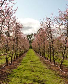 Raeburn Orchards - Accommodation Search