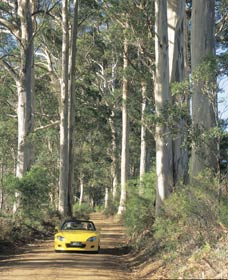 Mount Shadforth Scenic Drive - Accommodation Search
