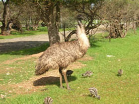 Minlaton Fauna Park - Accommodation Search
