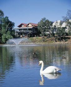 White Swans - Accommodation Search