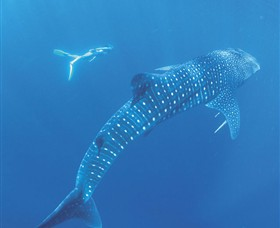 Ningaloo Marine Park - Accommodation Search