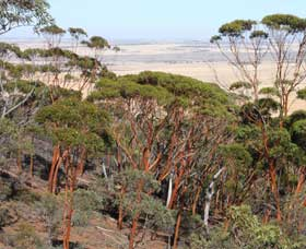 Mount Matilda Walk Trail Wongan Hills - Accommodation Search