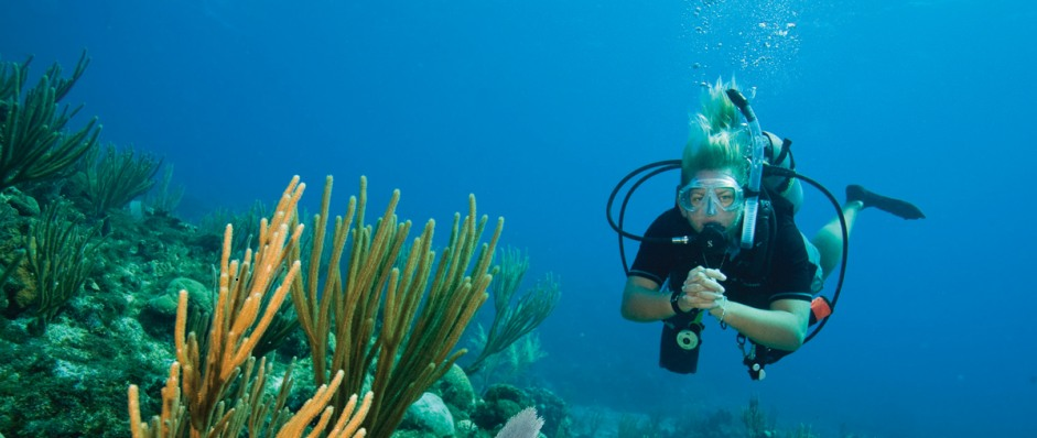 Coastal Water Dive - Accommodation Search