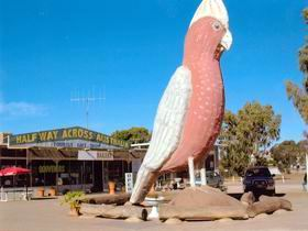 The Big Galah - Accommodation Search