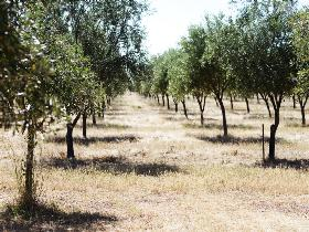 Talinga Grove Olive Oils - Accommodation Search