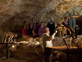 Naracoorte Caves National Park - Accommodation Search