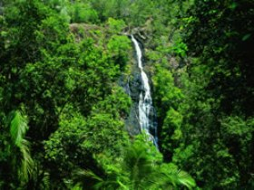 Kondalilla National Park - Accommodation Search