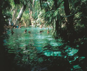 Mataranka Thermal Pool - Accommodation Search