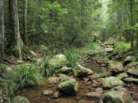 Amamoor State Forest - Accommodation Search