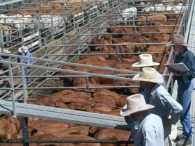 Dalrymple Sales Yards - Cattle Sales - Accommodation Search