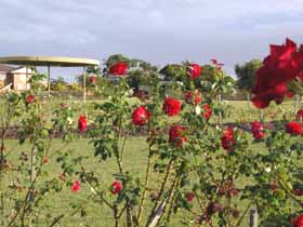 Elizabeth Park Rose Gardens - Accommodation Search