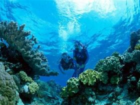 Coral Gardens Dive Site - Accommodation Search