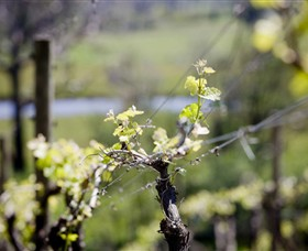 Norton Estate Wines - Accommodation Search