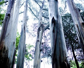Dandenong Ranges National Park - Accommodation Search