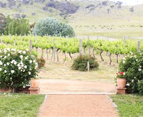 Brindabella Hills Winery - Accommodation Search