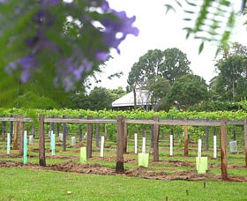 Douglas Vale Historic Homestead  Vineyard - Accommodation Search