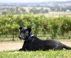 Moothi Estate Vineyard and Cellar Door - Accommodation Search