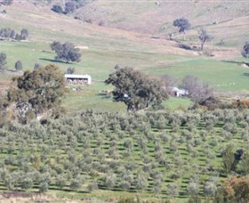 Wymah Organic Olives and Lambs - Accommodation Search
