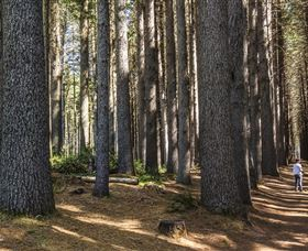 Sugarpine Walk - Accommodation Search