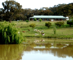 Clearview Alpacas - Accommodation Search