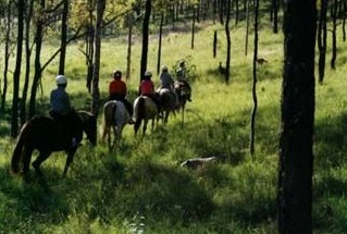 Hunter Valley Horse Riding and Adventures - Accommodation Search