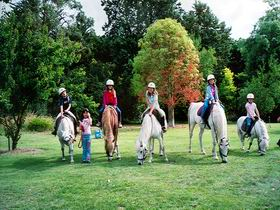 Limestone Coast Horseriding - Accommodation Search