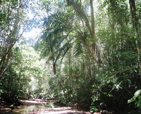 Mount Lewis National Park - Accommodation Search
