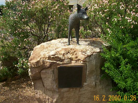 Dingo Statue - Accommodation Search