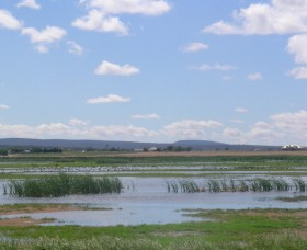 Fivebough Wetlands - Accommodation Search