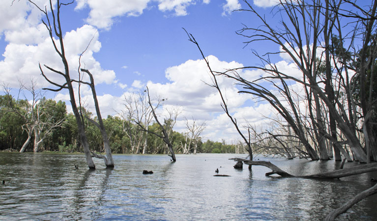 Murrumbidgee Valley National Park - Accommodation Search