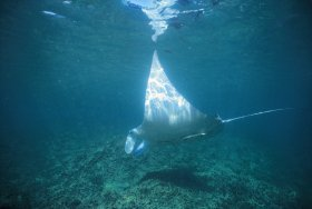 Manta Ray Bay Dive Site - Accommodation Search