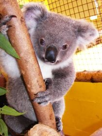 Cooberrie Park Wildlife Sanctuary - Accommodation Search