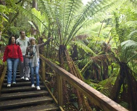 Otway Fly Treetop Adventures - Accommodation Search