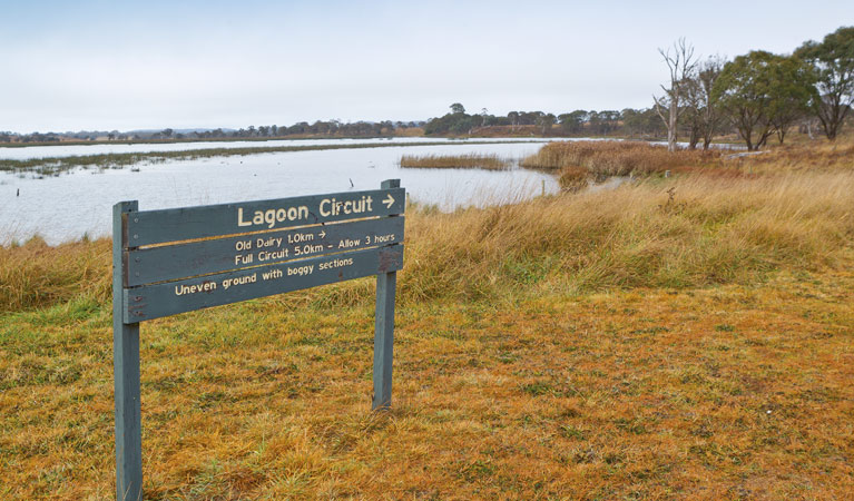 Lagoon Circuit walking track - Accommodation Search