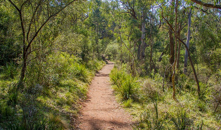 Mares Forest Creek walking track - Accommodation Search