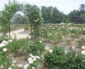 Victoria Park Rose Garden - Accommodation Search