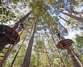 TreeTop Adventure Park Central Coast - Accommodation Search