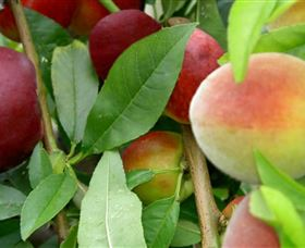 Fruit Salad Tree Company - Accommodation Search