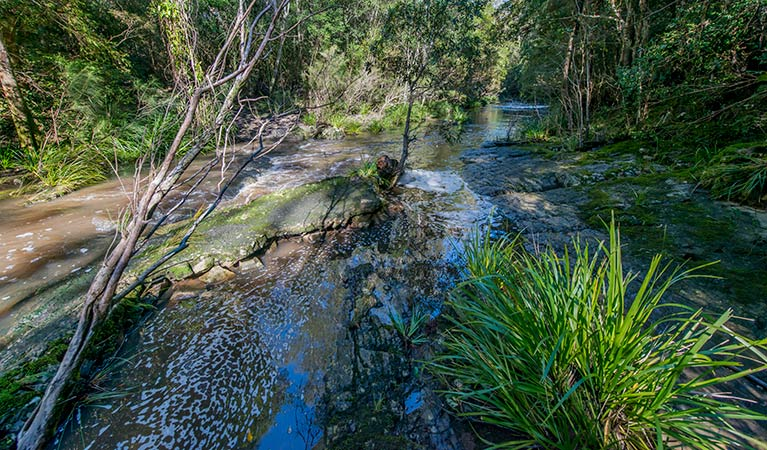 Dawson River walking track - Accommodation Search