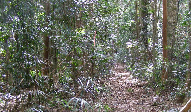 Big Scrub loop walking track - Accommodation Search