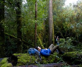 The Tarkine Drive - Accommodation Search