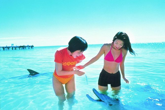Monkey Mia Dolphins  Shark Bay Air Tour From Perth - Accommodation Search