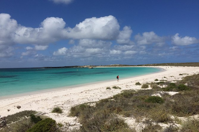 Abrolhos Island Half Day Fly and Flipper - Accommodation Search